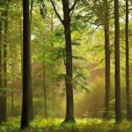 шипов лес