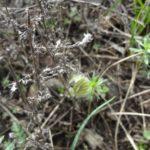 цветы воронежской области