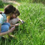 изучение растительности