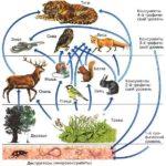 Пищевые цепочки