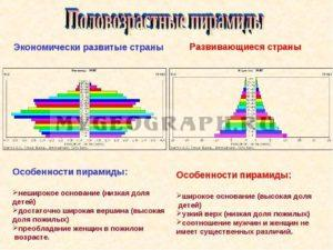 Сравнительная схема половозрелой пирамиды