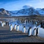 Антарктида 1