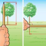 Измерение высоты дерева
